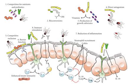 综述:益生菌的营养功能