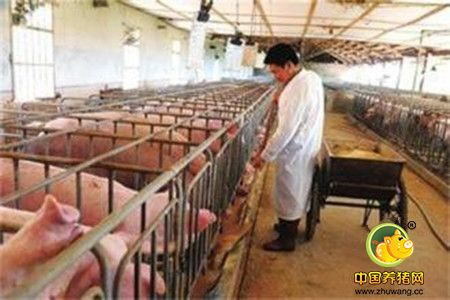 养猪户如何管理养猪场产房,规模化猪场产房细节管理