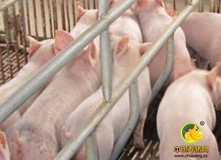 母猪排卵和产仔数量的方法