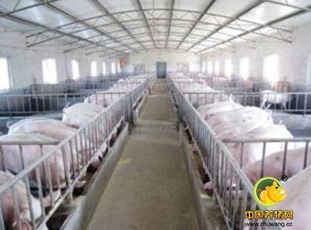 牛!养同样的猪,这家高楼型猪场可节省70%面积和人力投入