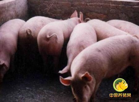 母猪泌乳量,酵母水解物改善母猪泌乳量