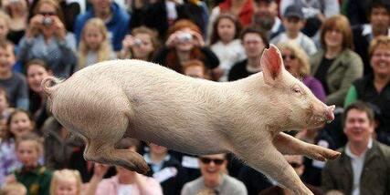 2017年生猪价格难降到7元以下!