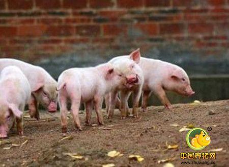 可能导致仔猪生长缓慢的原因
