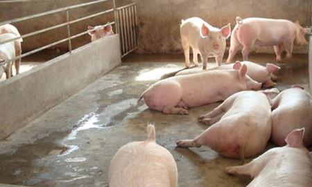 """不要让不良的用药习惯""""吃掉""""猪场的利润,猪场不良用药习惯有哪些?"""