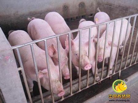 风水不是人的专利,建造猪舍也有很多忌讳!