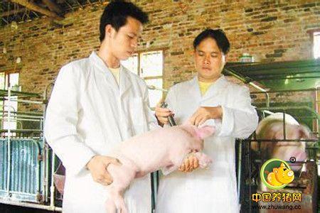 养猪不进行成本核算可能就是一笔糊涂帐!