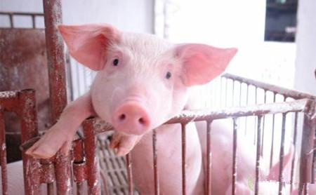 猪病治疗有7大忌,您都知道吗
