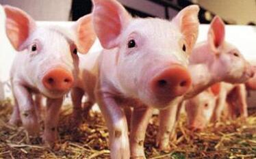 2017年2月18日(20至30公斤)仔猪价格行情走势