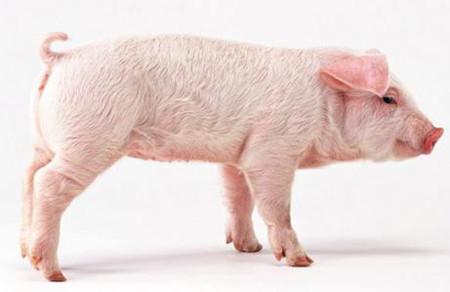 2017年2月19日(20至30公斤)仔猪价格行情走势