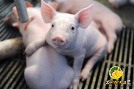 断奶仔猪的腹泻发生的原因分析与解决方案