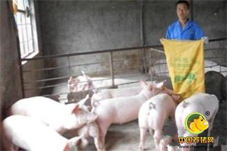 中小型猪场中存在的技术缺陷