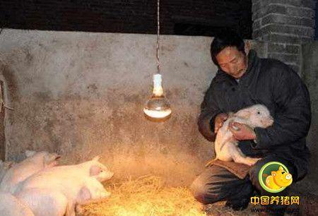 农村里家家户户养猪年代催生的五大职业