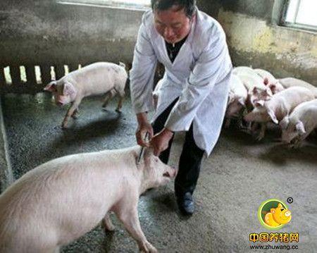 猪舍的形式
