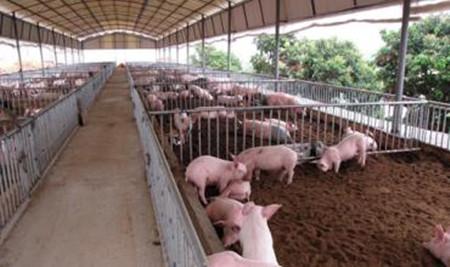 养猪过程中影响养猪场消毒效果的五大因素