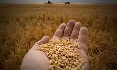 农业供给侧结构性改革成热点 种业、土改两主线受追捧
