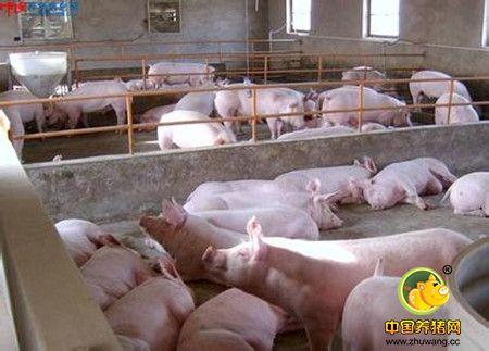 猪场老总一定要知道的12个基础数据计算