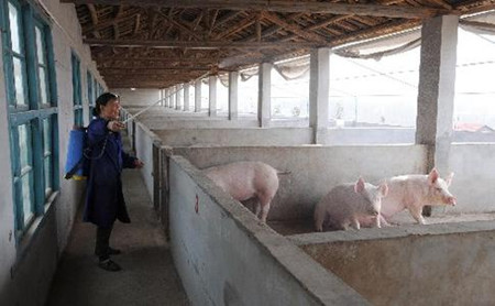 猪场净化方案
