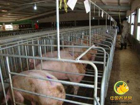 促进空怀母猪发情的方法,空怀母猪促情措施