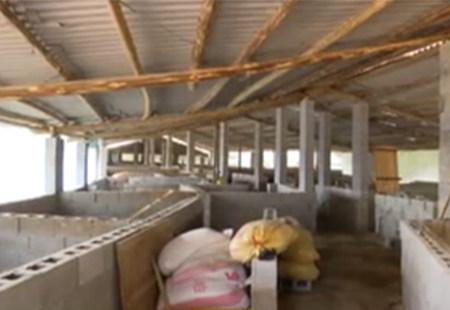 龙泉整治生猪污染3年来 生猪移栏出村后却仍在污染!!