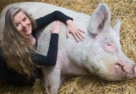 """不会被宰还享受按摩 荷兰农场过去22年几乎成""""猪的乐土"""""""