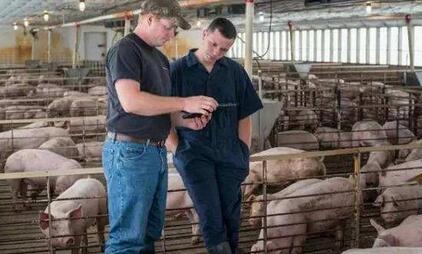百闻不如一见,外国养猪场就是如同神一般的存在!