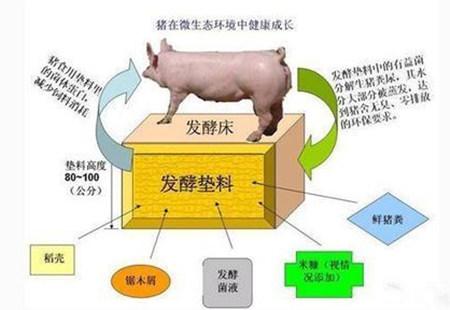 """""""槽式翻抛机+异位发酵床""""颠覆传统养猪业"""