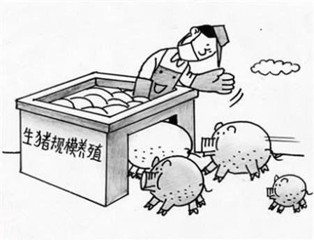 场内自繁自养——阻碍中国猪业发展的根本问题!!!
