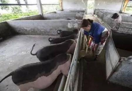 养猪10年也未必全懂的成本计算方法,能做到的都是牛人