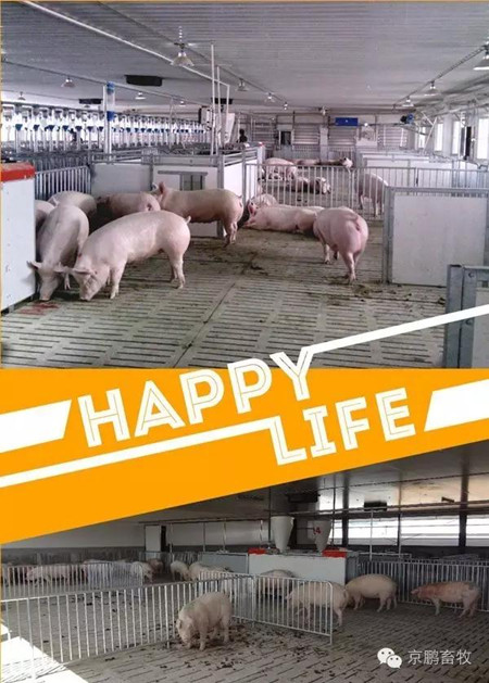 高继伟:动物福利如何带来更好的经济效益和更大附加值