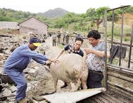 娄底:孙水河边一规模猪场被强制拆除