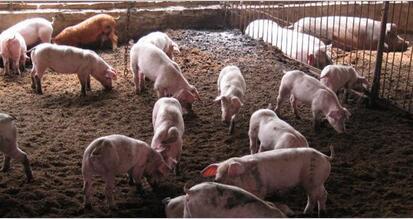 国内猪价出南北方普遍上涨的局面,猪价的涨幅有多大?
