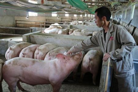 养猪建设中存在的问题及建议