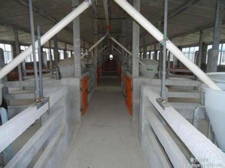 育肥猪猪舍规划与设计