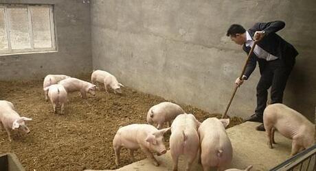 分析师:盈利缩水三成,猪价阶段拐点已到来!