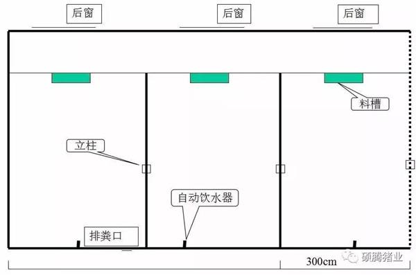 养猪技术 猪场建设 > 正文  图21 育肥猪大棚式双列猪场(1头/平方米)