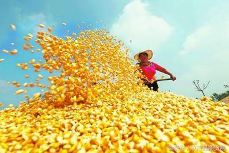 2017年03月25日全国玉米价格行情走势汇总