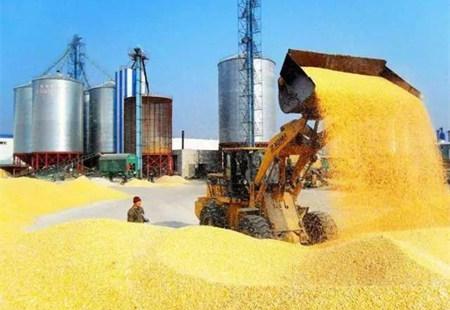 豆粕跌势加深,短期难有上涨!玉米补贴撞上拍卖,价格还能涨多久?