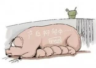 4种经产母猪不发情主要原因分析