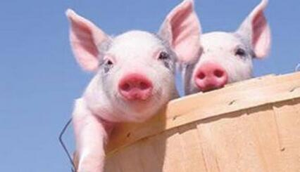"""美国猪肉价格不到国内一半,双汇靠""""洋猪肉""""控成本"""