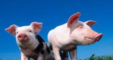 猪价在涨,但比去年同期下滑18%,已进入下滑通道?