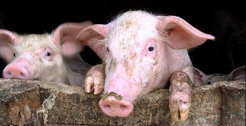 不是玩笑!环保部长发话:17年养猪清拆整治行动将更严格