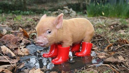 被罚多次排污依旧 江西这个养猪场太任性