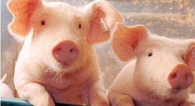 5月猪价上涨概率大 有望涨至8-8.5元/斤