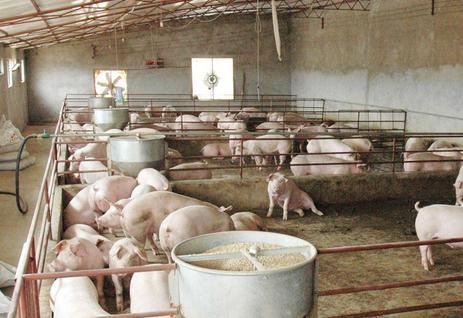 冬季猪场的饲养管理方法