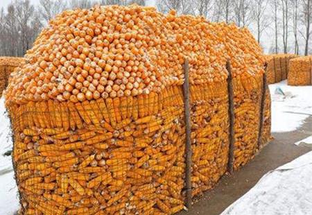 临储拍卖临近玉米价格向左还是向右?