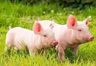 2017年5月30日(20至30公斤)仔猪价格行情走势
