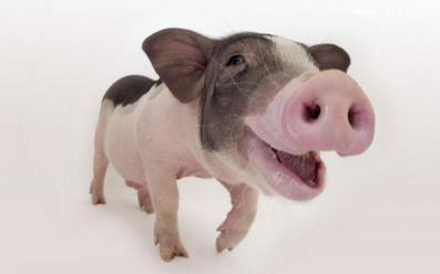 清粪机紧绳妙招及养猪场安装清粪机实例