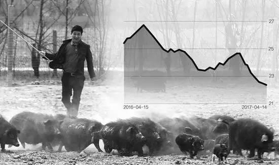 猪价暴跌逼近7元/斤,谁在挑战养殖户的防守底线?