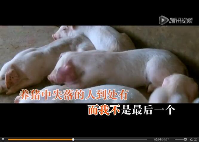 《养猪情歌》唱出养猪人的心声……