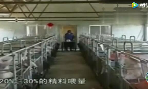 现代实用科学养猪技术视频—产前母猪饲养管理技术